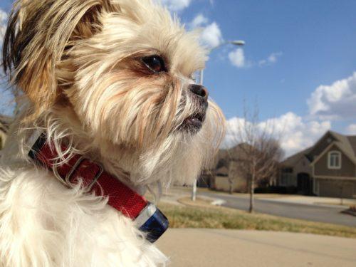 Julie's dog