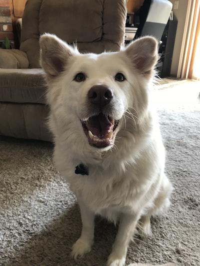 Doug's dog Wags